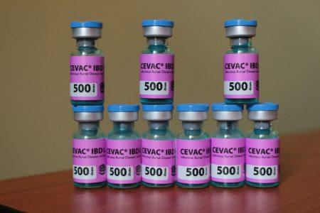 Cevac IBD L (2)